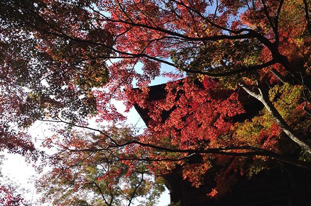 JR京都站到清水寺最快路线实景示意图21清水寺的红叶