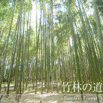嵐山竹林の道・竹林の小径