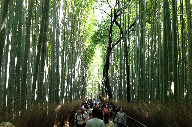 JR嵯峨嵐山駅から竹林の道を通って野宮神社への行き方道順08