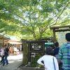 【行き方写真付】トロッコ嵐山駅から竹林の道、天龍寺、野宮神社、京福嵐山駅、渡月橋を通って嵐山モンキーパークいわたやまへのアクセス