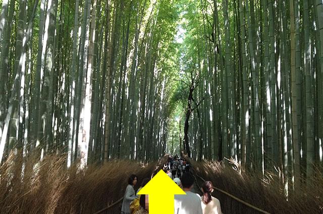 トロッコ嵐山駅から嵐山モンキーパークいわたまでの行き方道順08